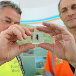 District Stewards Paul Bailey and Derek Bean with an Asian Hornet specimen