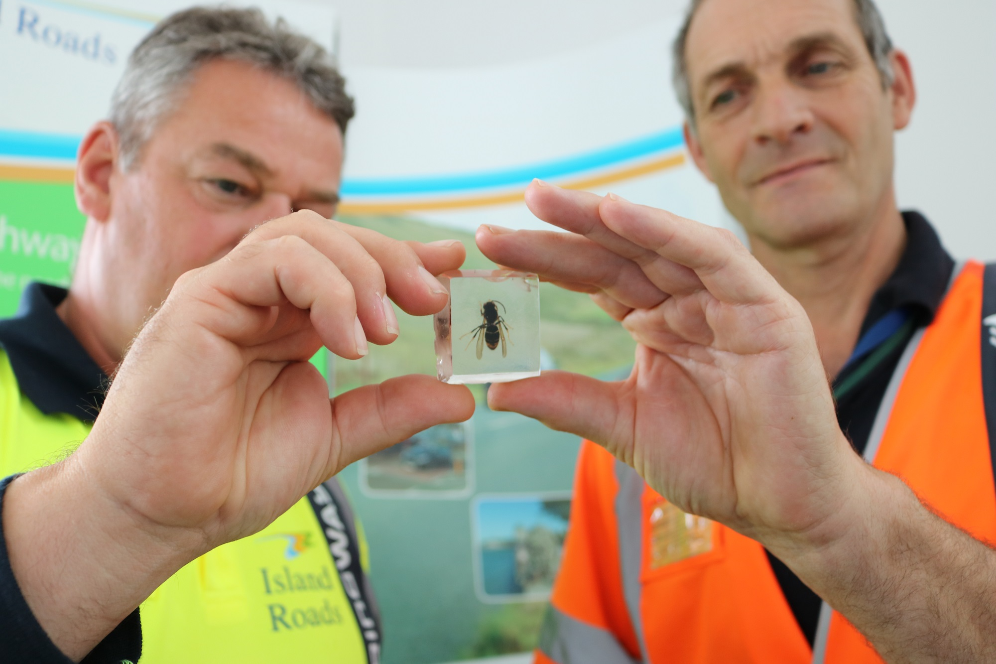 District Stewards Paul Bailey and Derek Bean with an Asian Hornet specimen