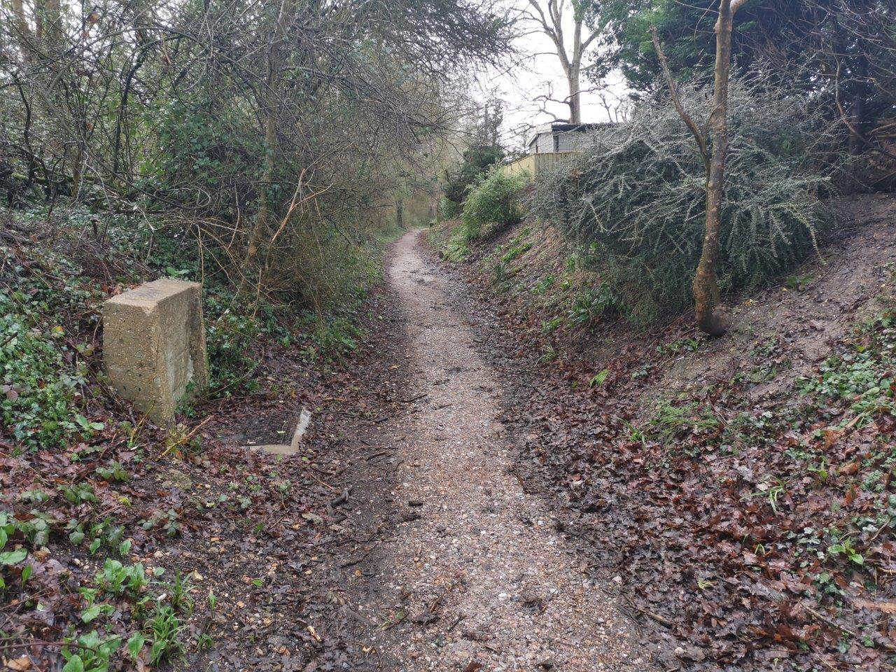 narrow roughly surfaced cycle track bordered by hedges and trees